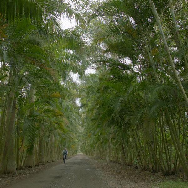 Travel México: Soy Veracruz
